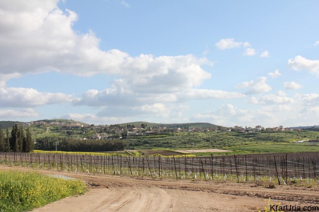 כפר אוריה - מראה מכיוון צפון