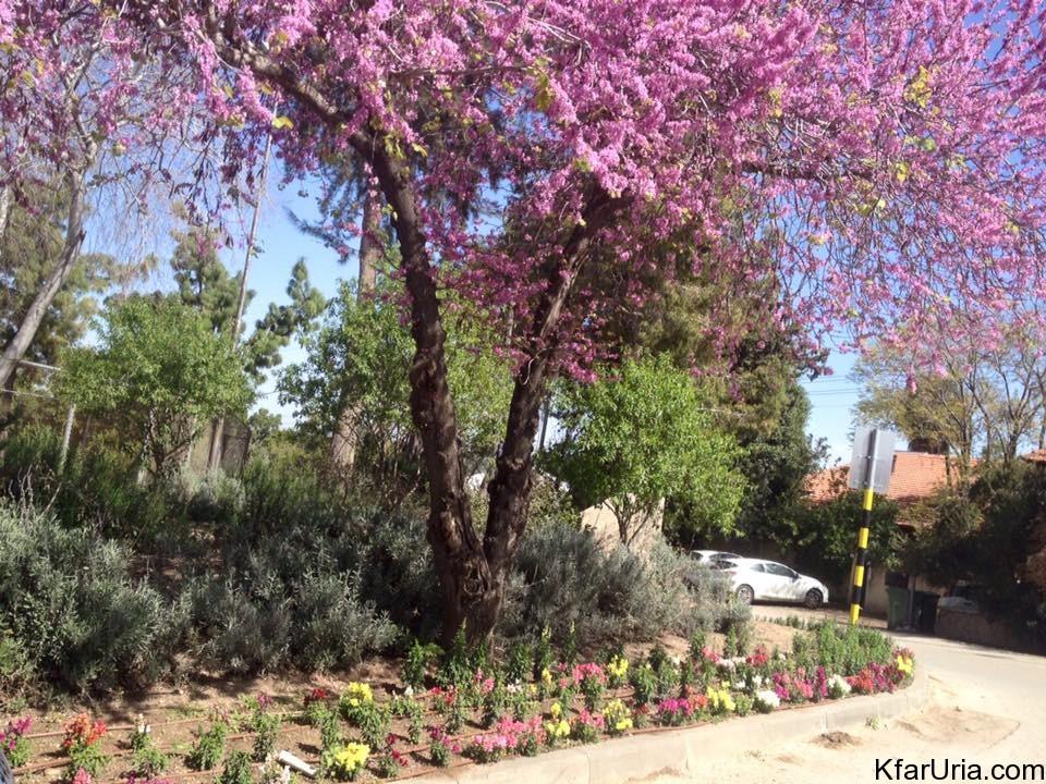 אביב במרכז המושב כפר אוריה מרץ 2016